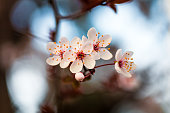 istock Blooming Tree in Spring with Flowers 1217580943