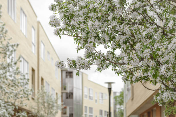 Blooming trees in a spring city stock photo