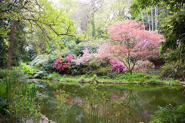 árvores na natureza - jardim do eden - fotografias e filmes do acervo