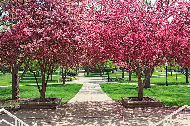 Blooming Trees on Illinois State University stock photo