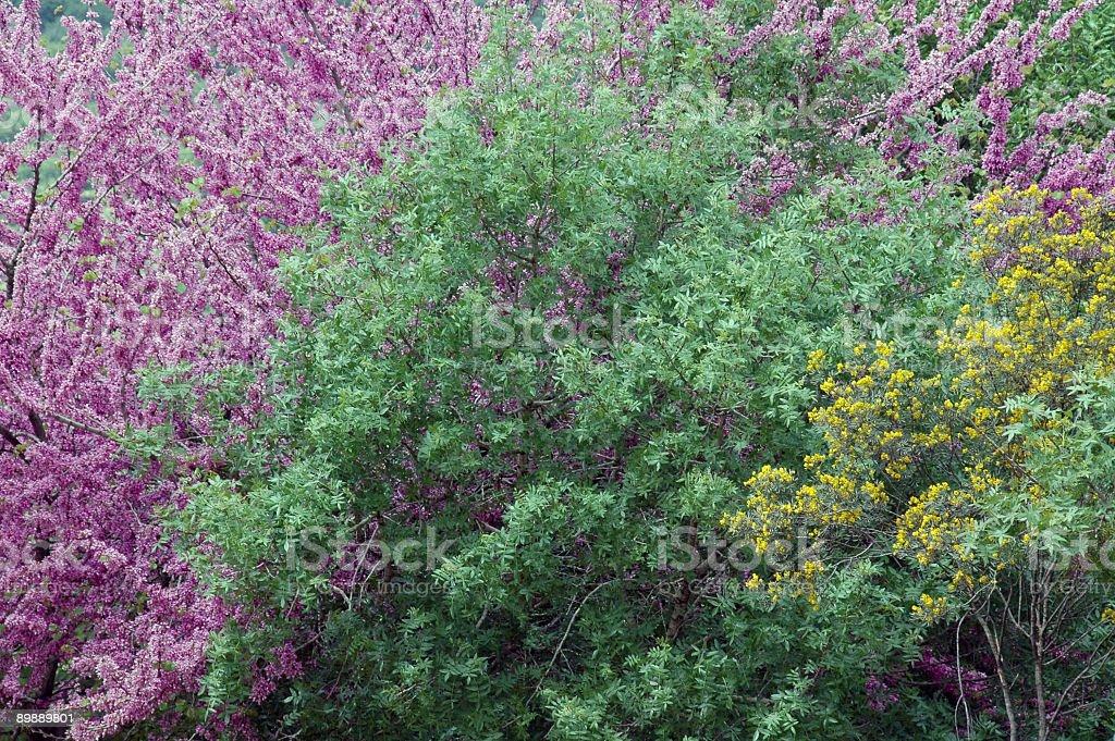 Blühende Bäume Lizenzfreies stock-foto