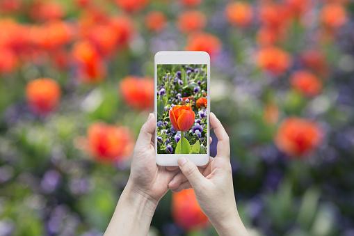 Camera - Photographic Equipment, Field, Formal Garden, Internet, Meadow