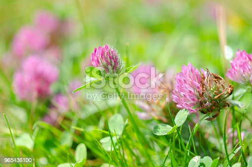 Blooming Wild Flowers On The Meadow At Spring Time Stock Photo & More Pictures of Agricultural Field