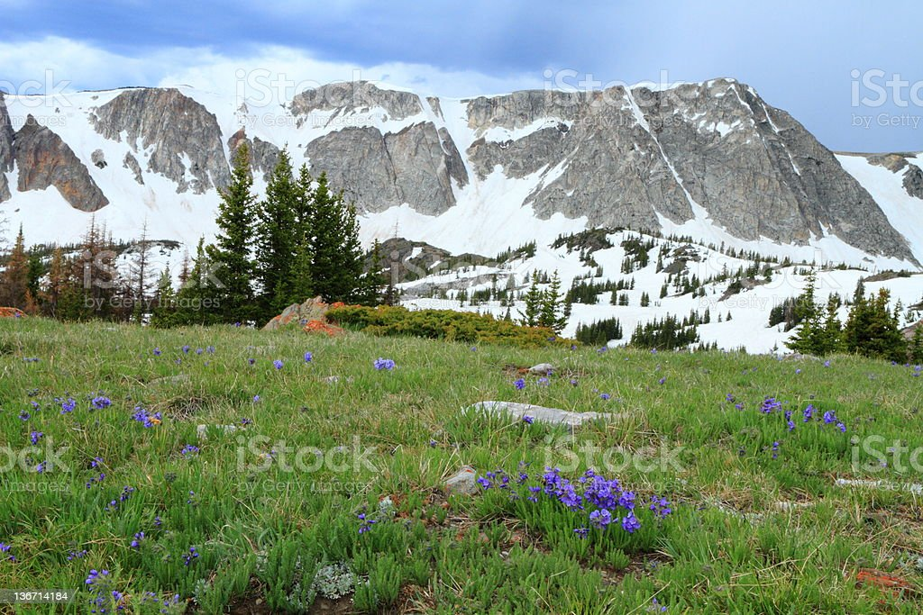 Blooming wildflowers in the mountains stock photo