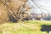 Blooming willow catkin on sunny spring day