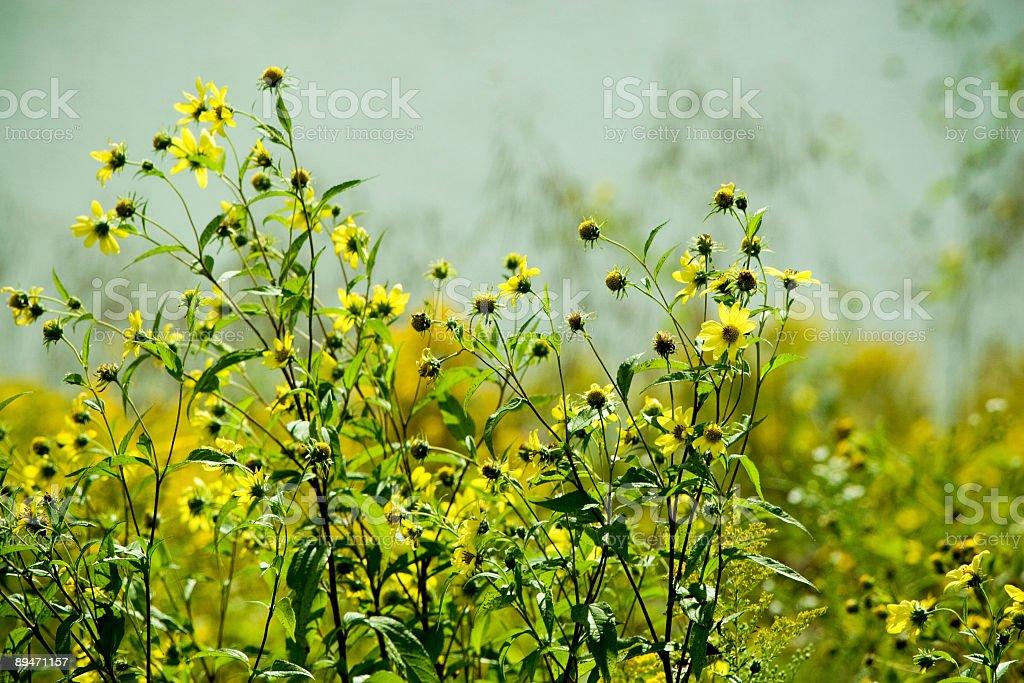 Blühende Gelb Lizenzfreies stock-foto