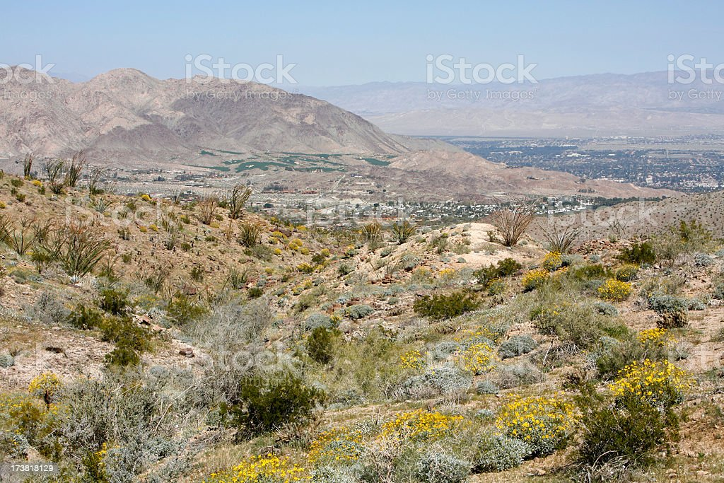 Blooms High Above Palm Desert stock photo
