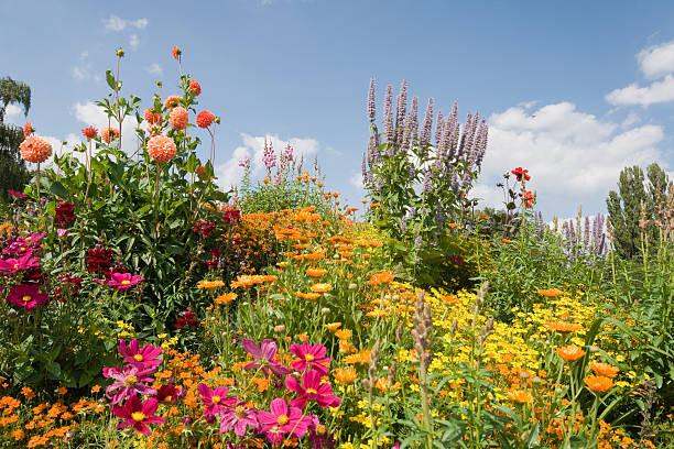 Bloomy garden picture id182176345?b=1&k=6&m=182176345&s=612x612&w=0&h=4hn5rdclbeqcolnzwscytmt98mrgwzo4ik3hiuqkgvs=