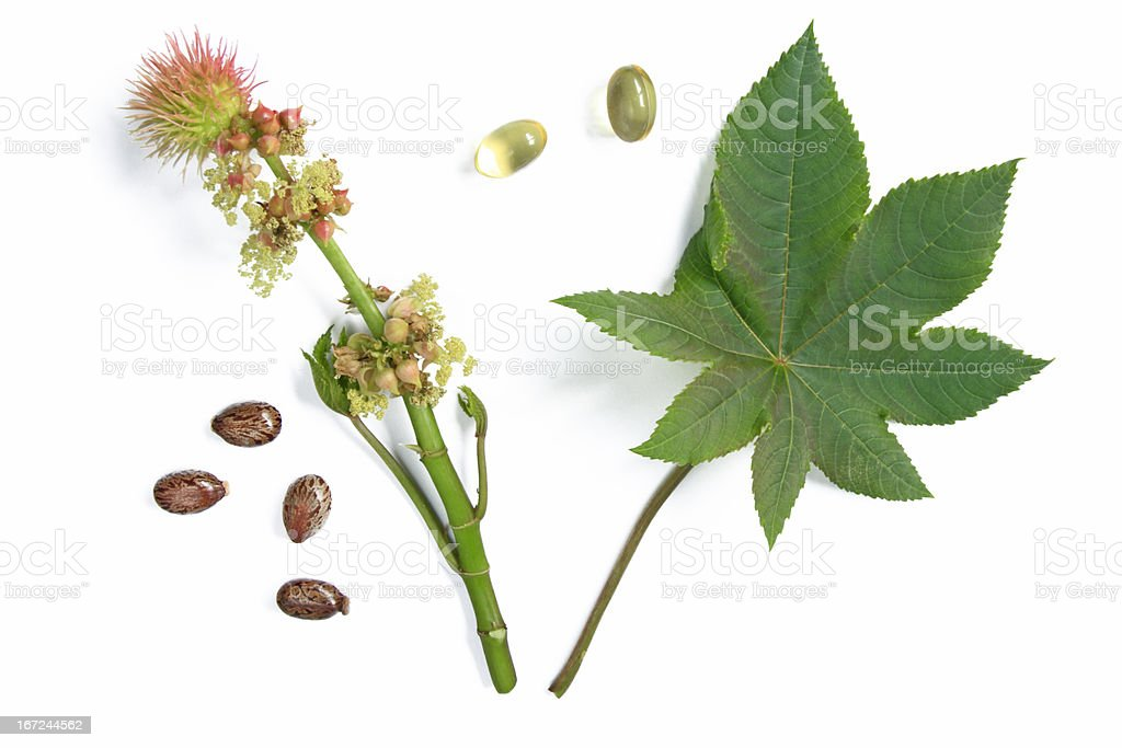 Blossom and leaf of the castor plant stock photo