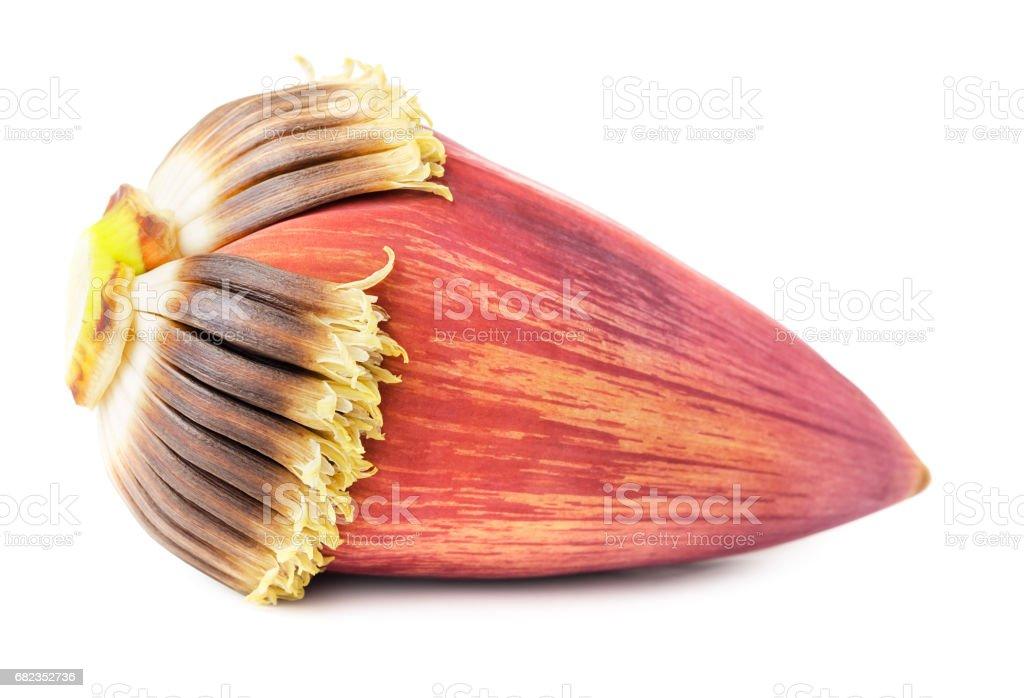 Blossom banana royalty free stockfoto