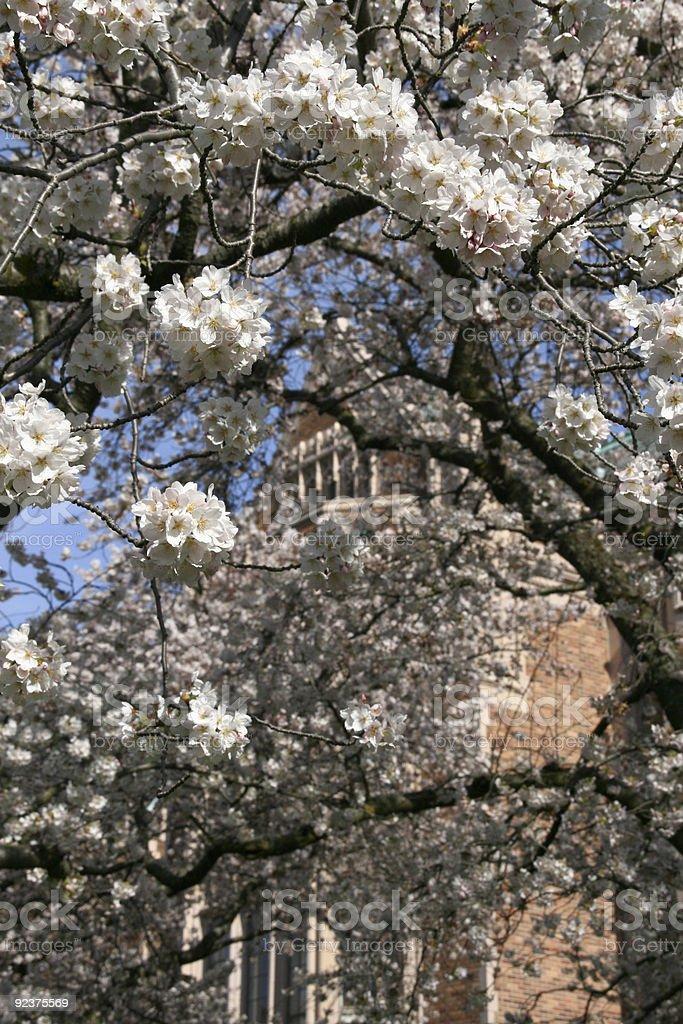 Blossom & Branch Umbrella royalty-free stock photo