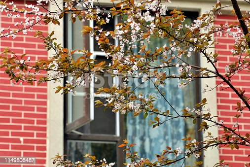 Blossom cherry flowers in a Chinese high-grade residential