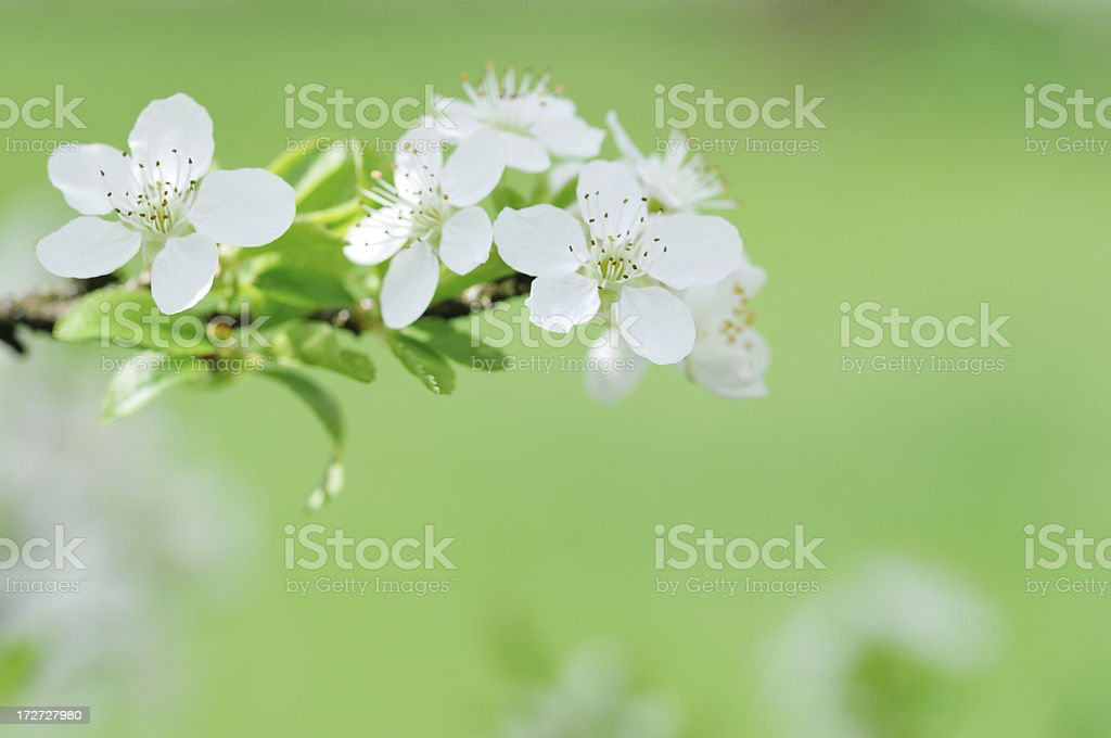 Blossom detail royalty-free stock photo