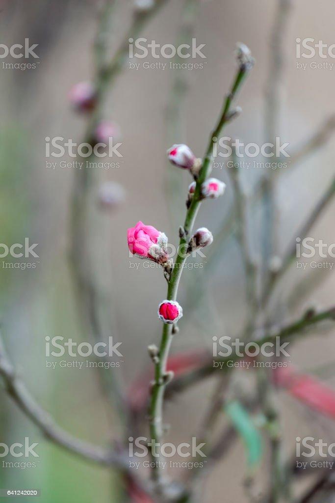 Blossom flower stock photo