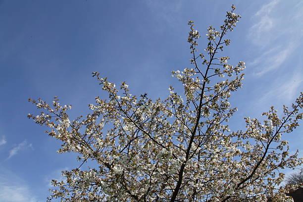 Blossom on a tree stock photo