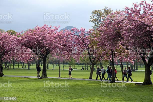 Blossom on campus picture id172219450?b=1&k=6&m=172219450&s=612x612&h=hivzogg o9u6yyhavp3eh3yjpkyc 4emulcu2nhvu7m=