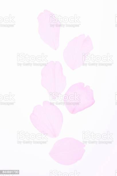 Blossom petals picture id844691730?b=1&k=6&m=844691730&s=612x612&h=3kn1ld3naee tzg9jzy3xkvcpnwge 1uzdultdxzvbo=
