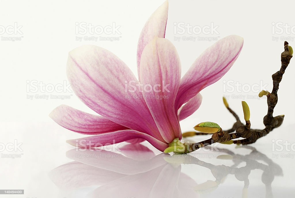 blossom stock photo