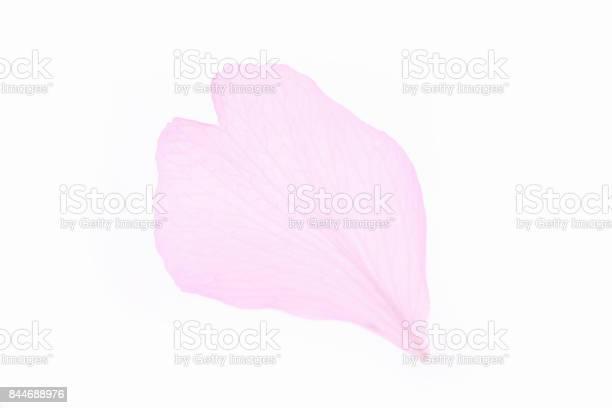Blossom picture id844688976?b=1&k=6&m=844688976&s=612x612&h=9im5lt 6vls4nw1x0zk2vujwpzmdajvs4yknwnumkja=