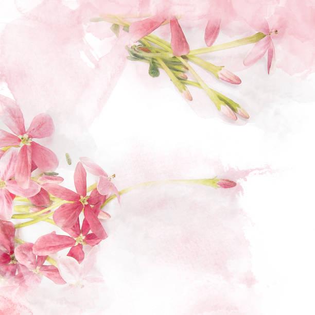 Blossom pink flower picture id915582128?b=1&k=6&m=915582128&s=612x612&w=0&h=stzoorys wccfzdn6og8vt4m6iyngzgfwmybuaofev0=