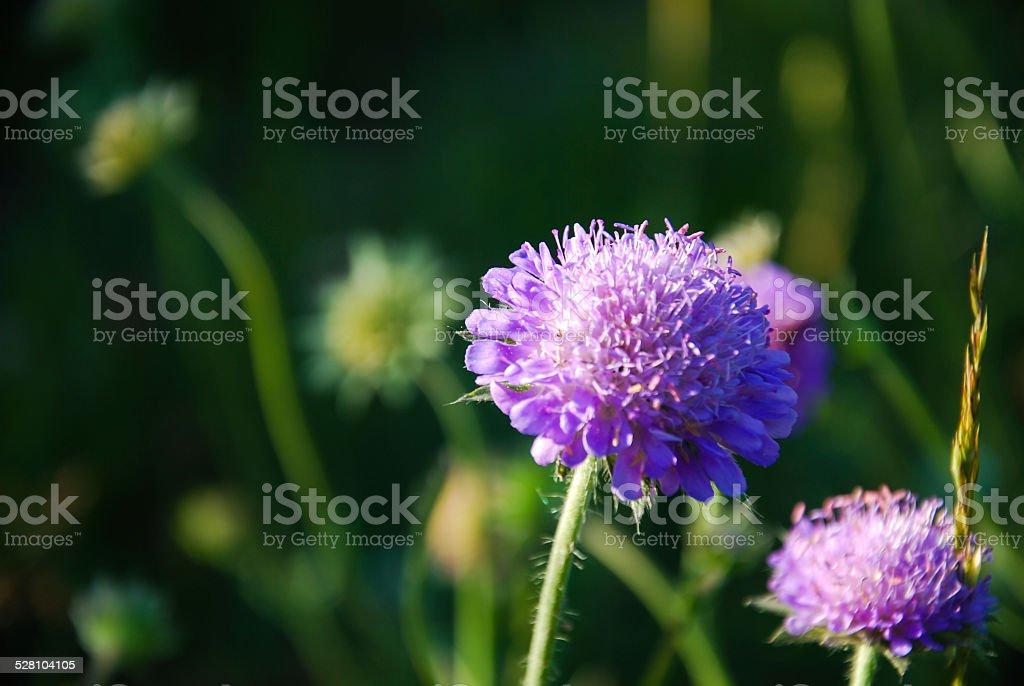 Blossom summer flower stock photo