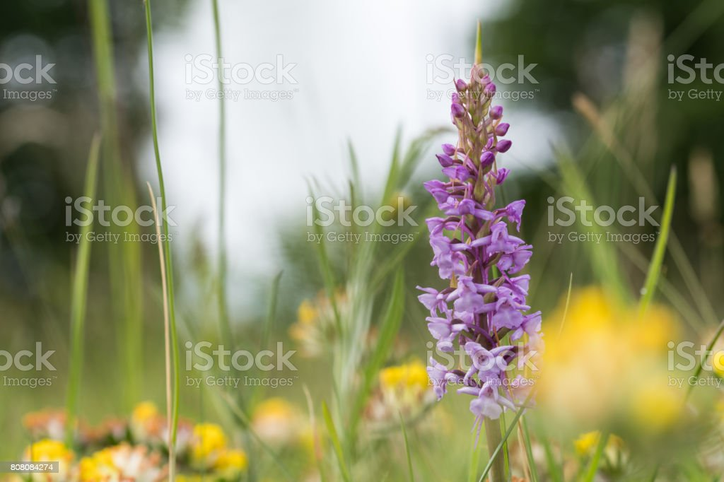 Blossom summer meadow detail stock photo