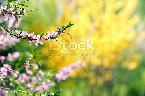 istock Blossom tree bush over nature blurred background. Spring flowers. 678639336