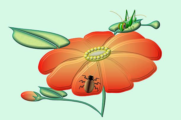 Blossom mit Insekten – Foto