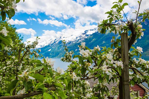 Eine blühende Landschaft mit ihren Apfelgärten – Foto