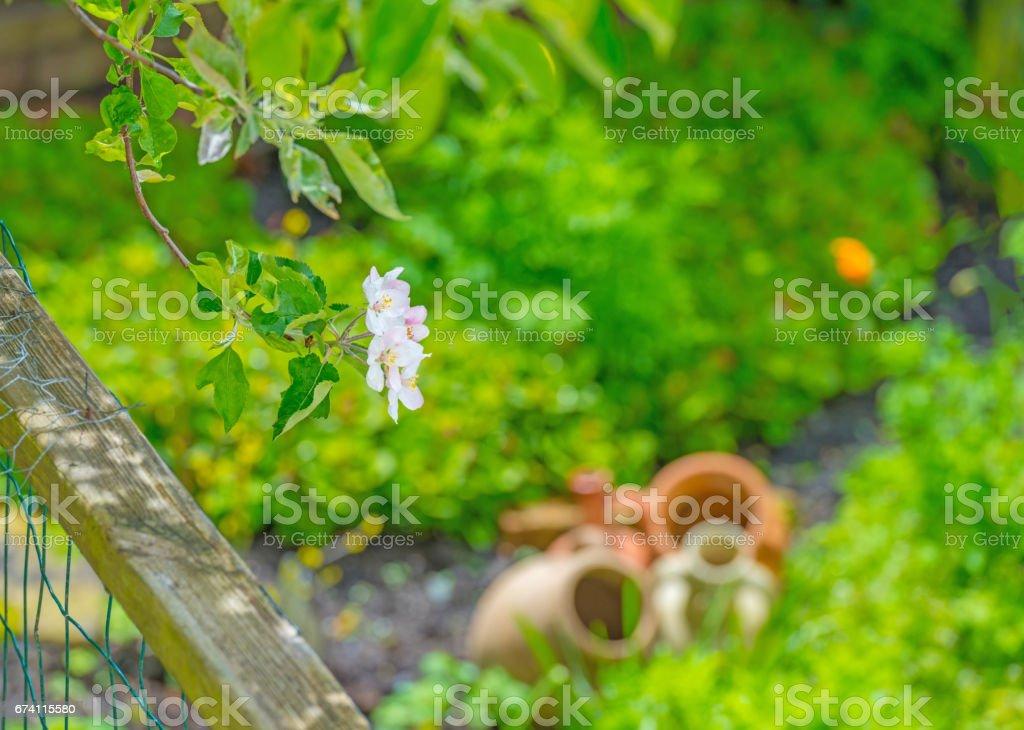 春天的花園裡盛開的蘋果樹 免版稅 stock photo