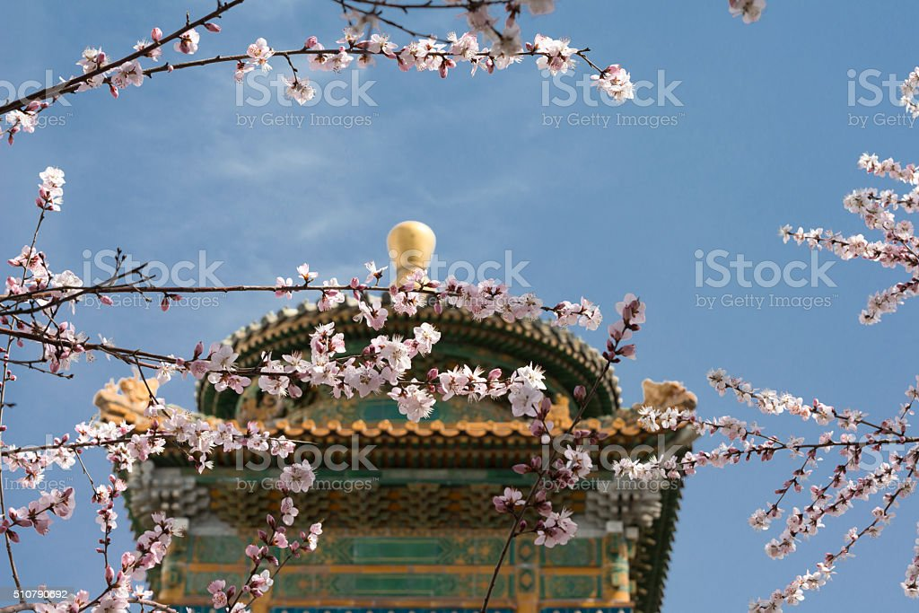 Blossoming cherry tree and pavilion at springtime in Beijing stock photo