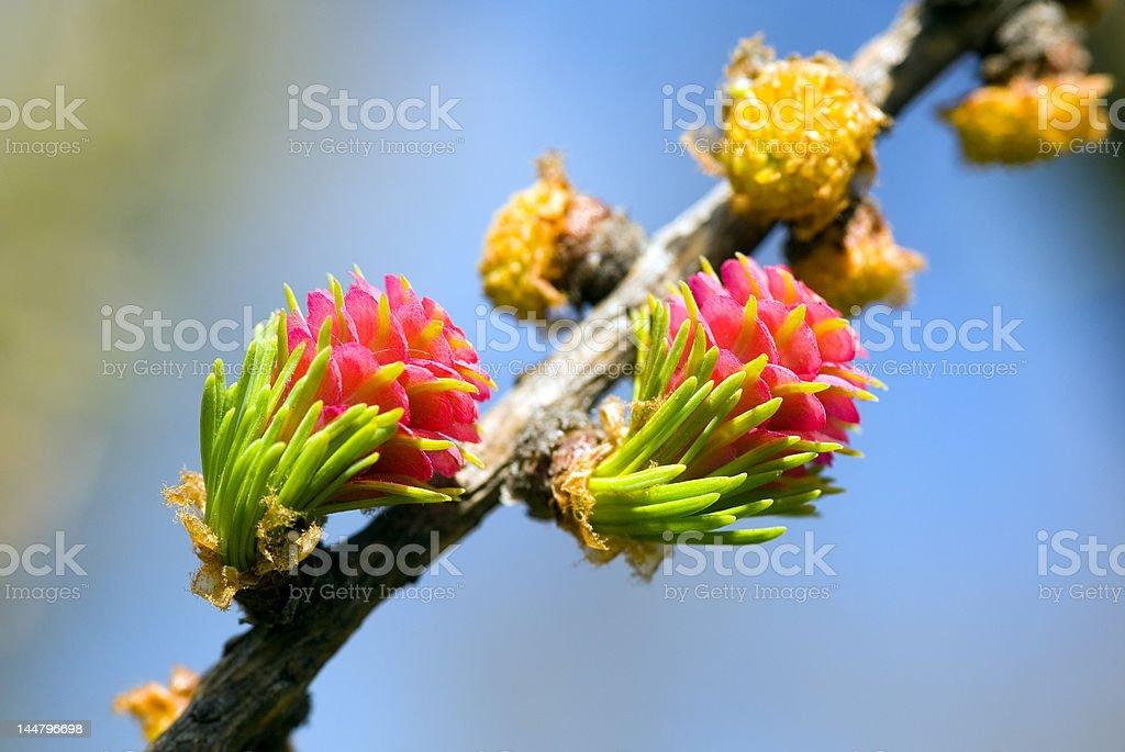 Blossoming close-up royalty-free stock photo