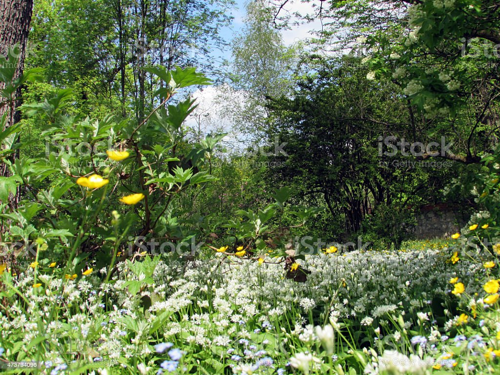 Blossoming meadow stock photo