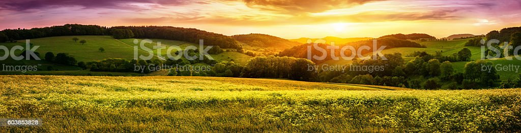 Blossoming meadow sunset panorama stock photo