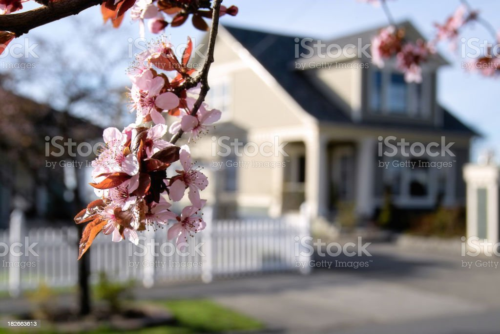Blossoming Neighborhood stock photo