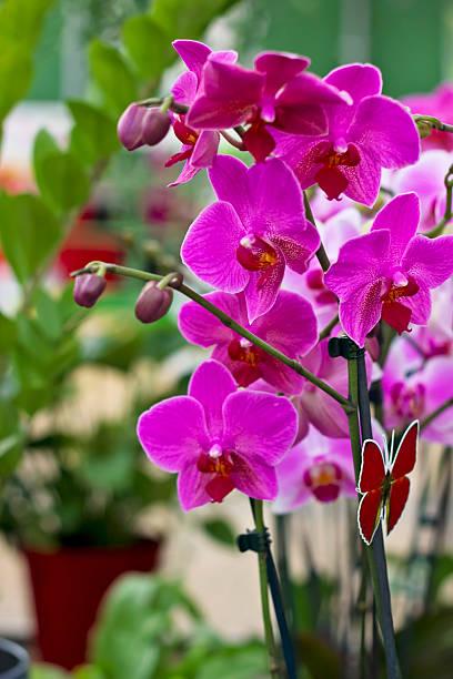 blühenden purple orchid - lila, grün, schlafzimmer stock-fotos und bilder