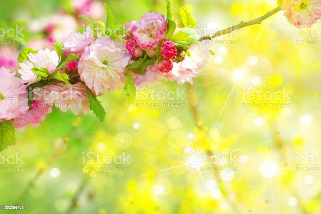 Blossoming Sakura Tree Background Stock Photo Download Image Now Istock
