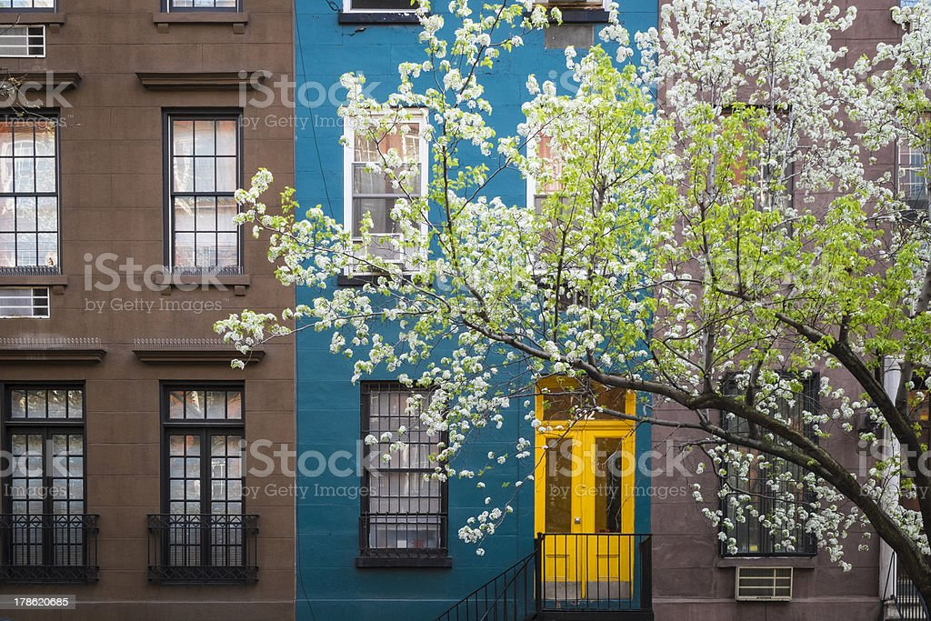 Blossoming tree, apartment building, Manhattan, New York City stock photo