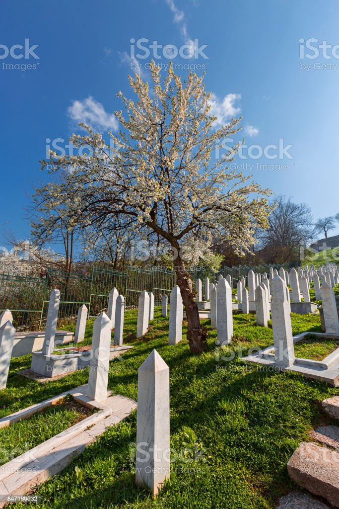 Blossoming tree in muslim cemetery, Sarajevo, Bosnia and Herzegovina. stock photo