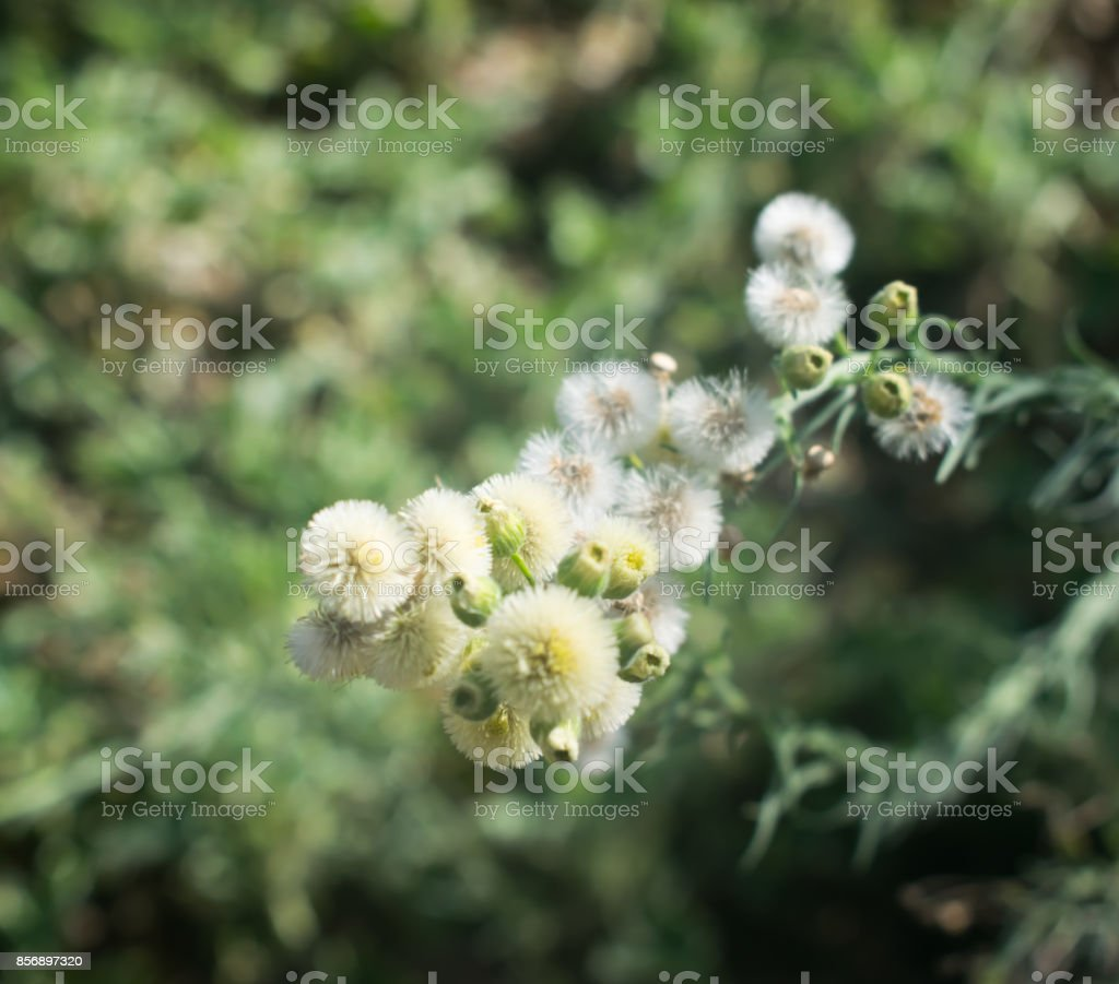 Blossoming Wild Plants stock photo