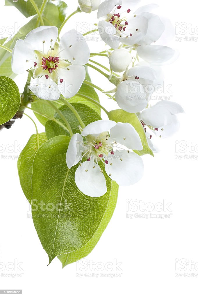 Blossoms close-up. royalty-free stock photo