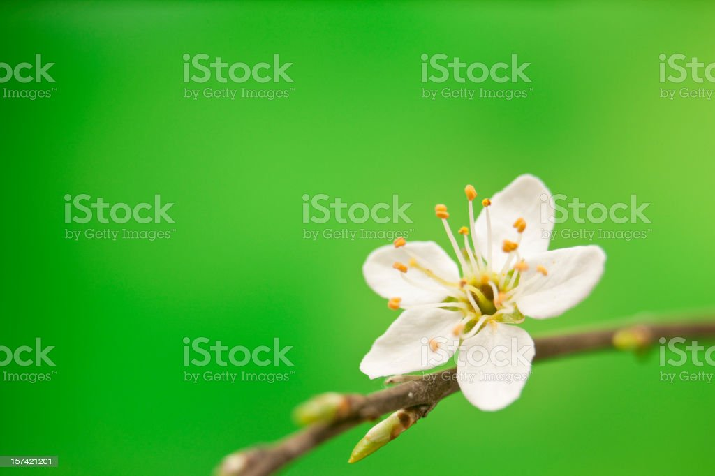 Blossoms on green royalty-free stock photo