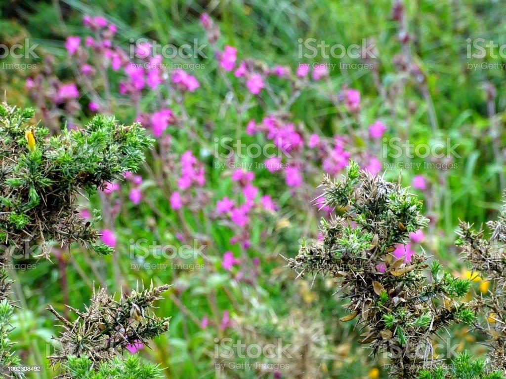 Blüten – Foto