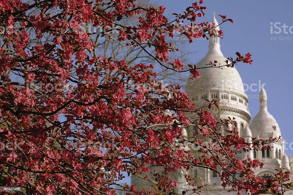 Blossoms, Sacre Coeur, Montmartre, Paris, France. stock photo
