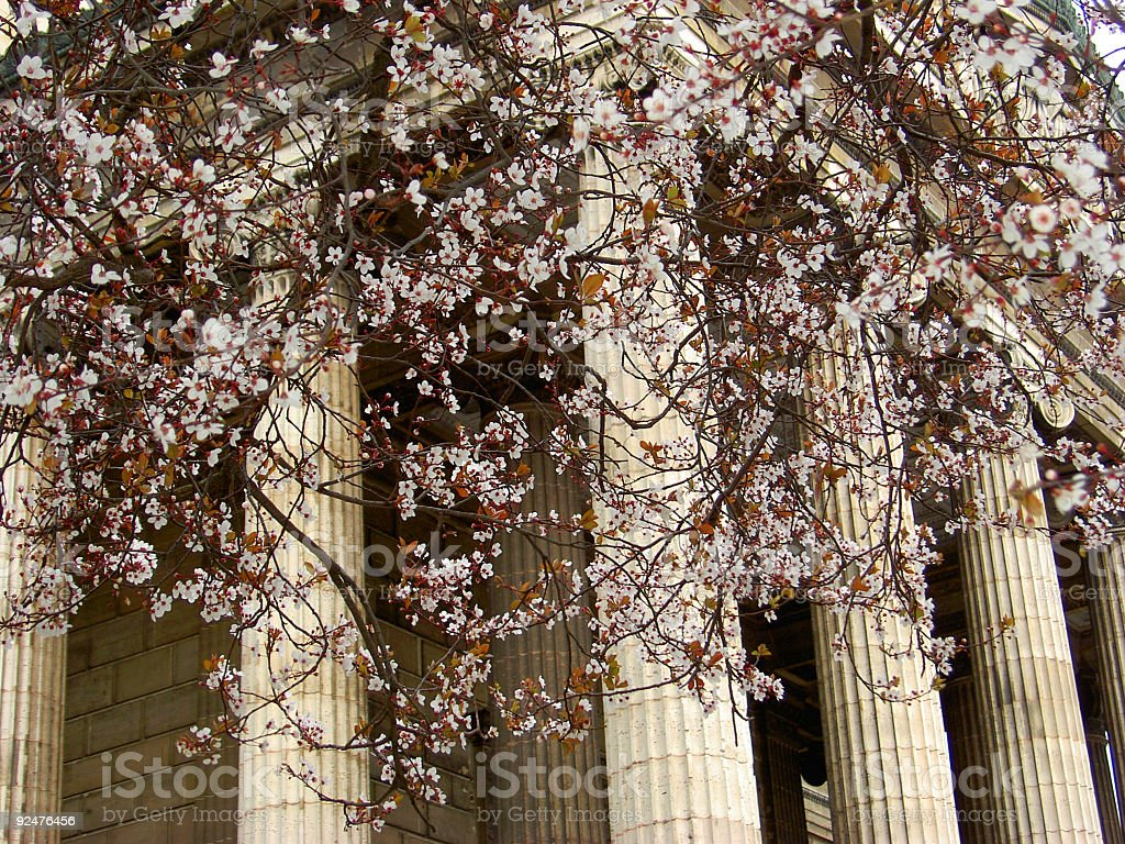 Blossoms & temple royalty-free stock photo