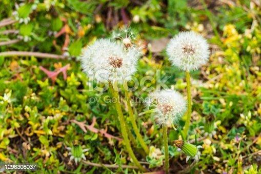Wild Flowers on Pasture