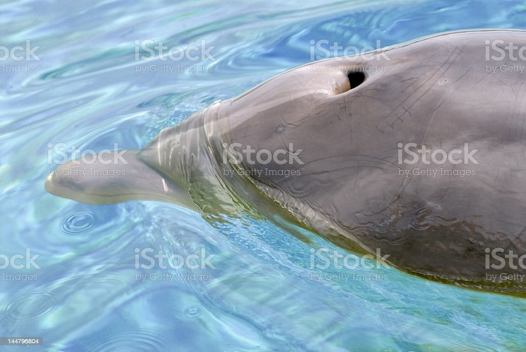 Blow hole of dolphin stock photo