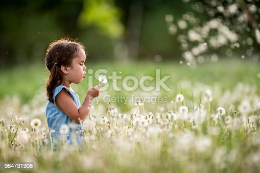 A girl is outdoors in a field on a summer day. She is blowing a dandelion. The spores are flying through the air.