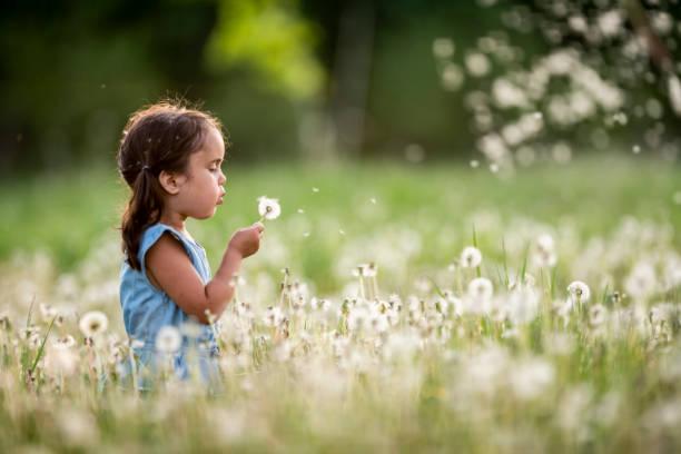 Best Child Blowing Dandelion Stock Photos, Pictures ...