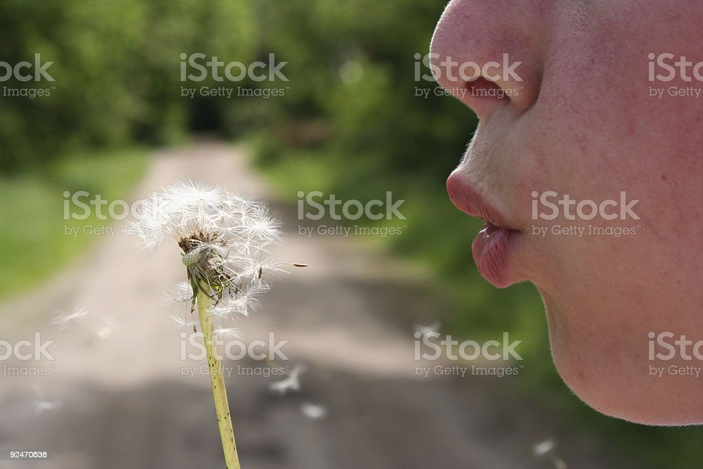 Blowing Dandelions royalty-free stock photo